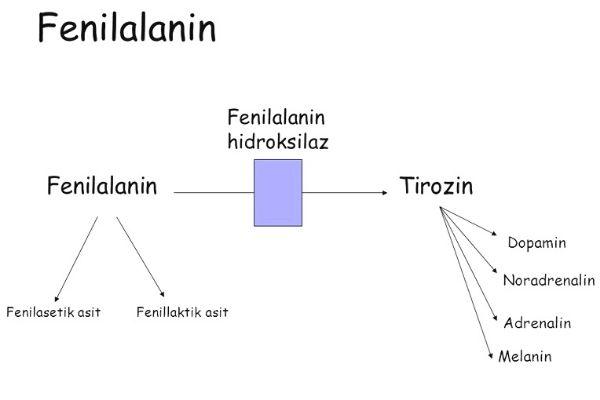 fenilalanin nedir