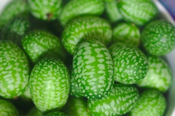 şelengo meyvesi
