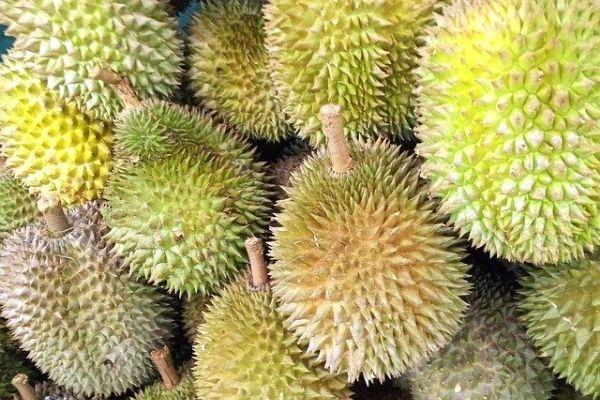durian meyvesi faydaları