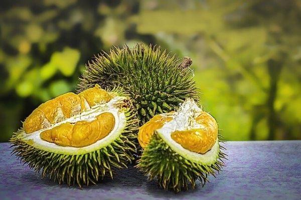 Durian Meyvesi: Tadı Cennet Kokusu Cehennem Tarifi