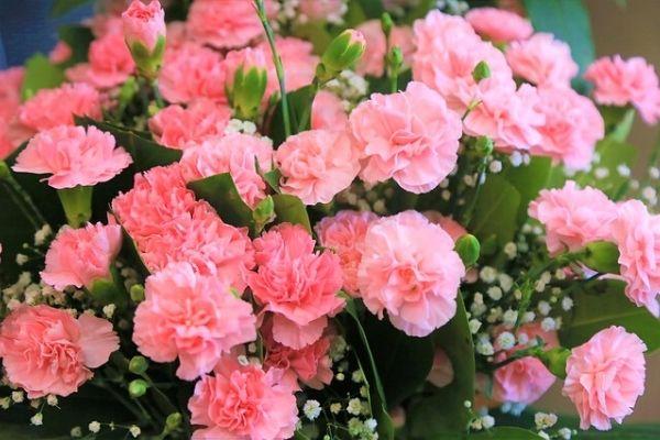 karanfil çiçeği çeşitleri