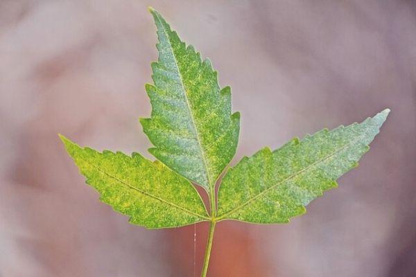 neem yağı faydaları