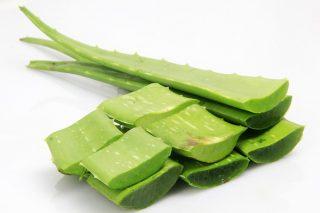 Aloe Veranın Az Bilinen 6 Zararlı Etkisi Tarifi