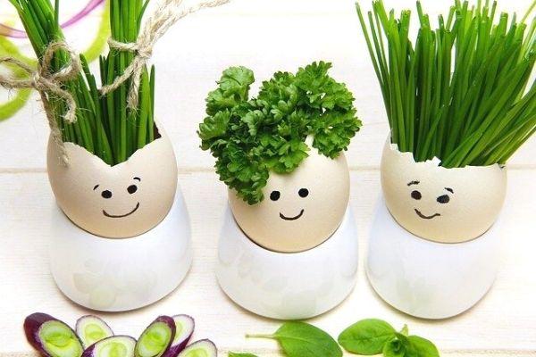 yeşillik sapları