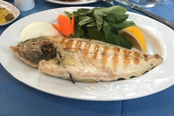 olta balık