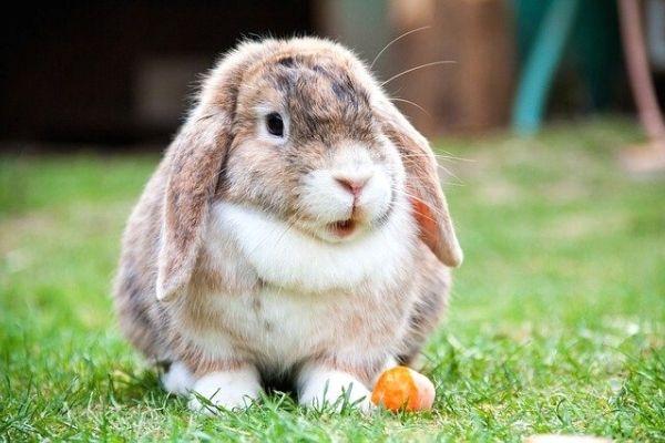 bebek tavşanlar ne yer