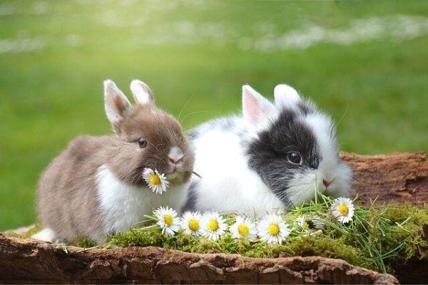 tavşanlar ekmek yer mi