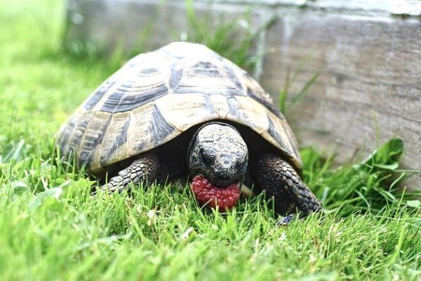 kaplumbağalar ne yer ne içer