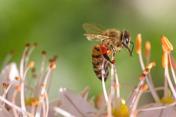 arı zehiri kremi