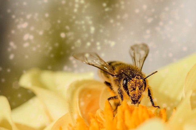 arı zehiri faydaları