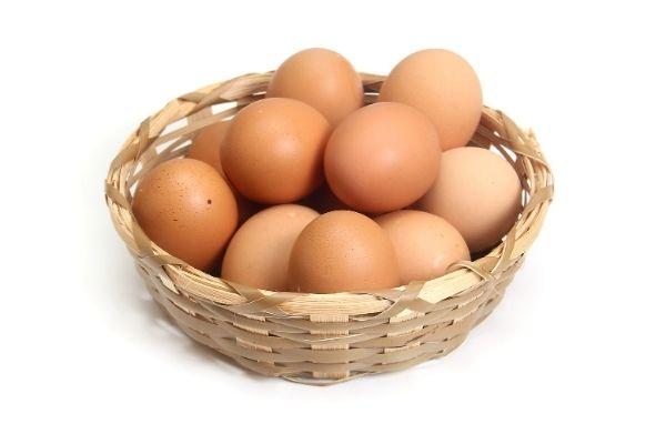 yumurta kod sorgulama