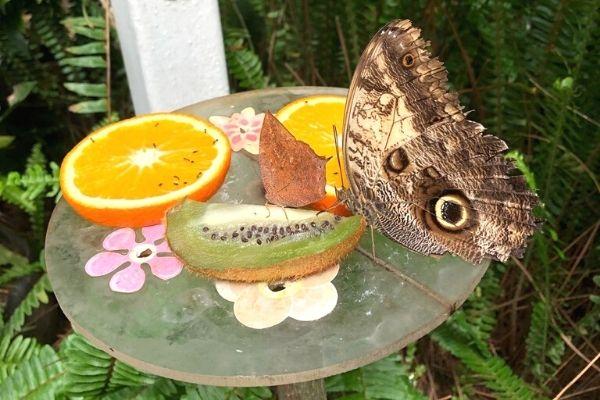 kelebek çiftliği beykoz