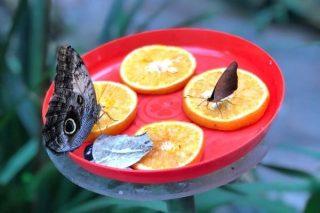 Beykoz Kelebek Çiftliği Kahvaltı ve Giriş Ücreti Tarifi