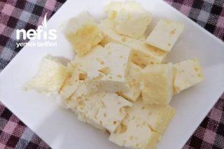 Ağız (Avuz- Kolostrum) Sütünden Peynir Yapımı Tarifi