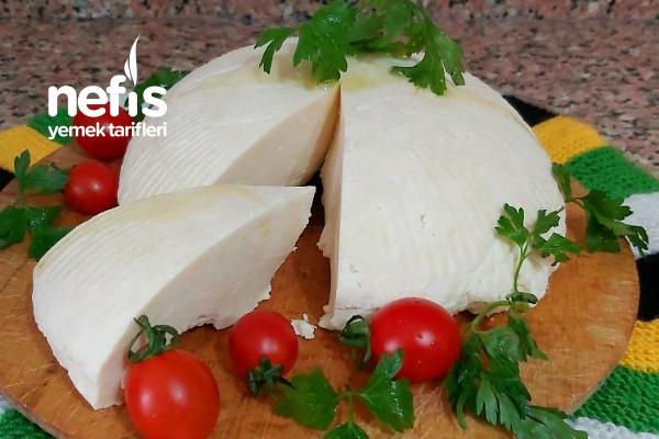 Peynir Yapımı (Evdeki Malzeme İle)