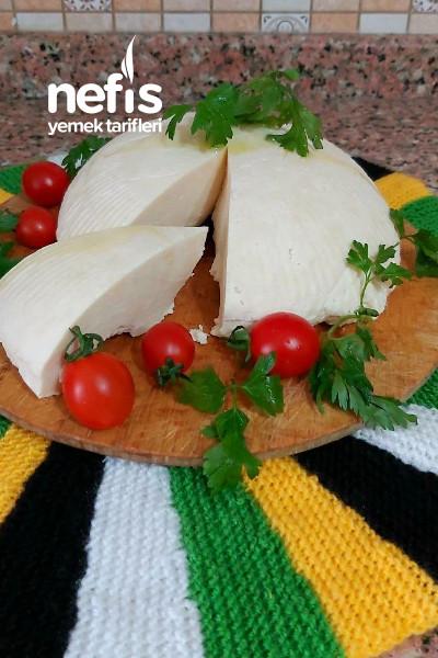 Peynir Yapımı (Hmn Evdeki Malzeme İle)