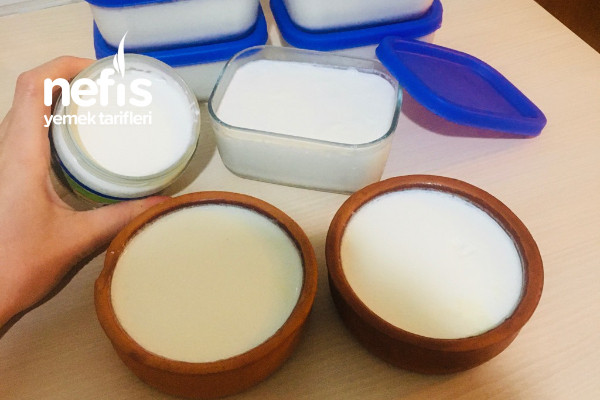 Probiyotik Yoğurt Mayası İle Yoğurt Yapımı
