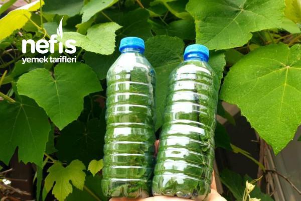 Tuz Ve Su Kullanmadan Üzüm Yaprağı Saklama (Videolu)