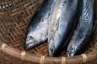 Uskumru Balığı Nasıl Pişirilir? Tarifi