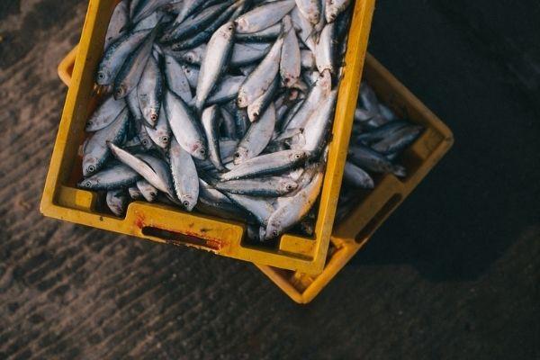 balıklar hakkında her şey