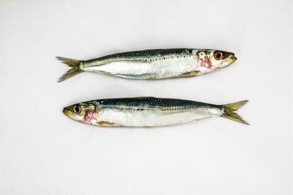 Balıklar Hakkında Merak Edilenler Tarifi