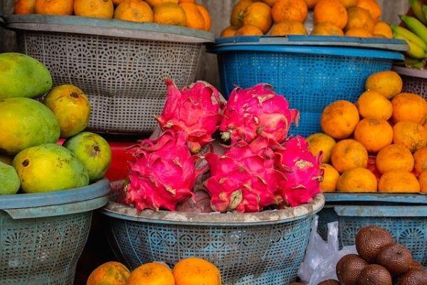Ejder Meyvesi Yetiştiriciliği Nasıl Yapılır?