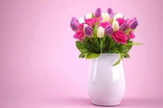 Lale Çiçeği Özellikleri, Anlamı, Evde Bakımı Tarifi
