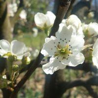 bahar yemekleri