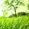 Nergis Yeşil