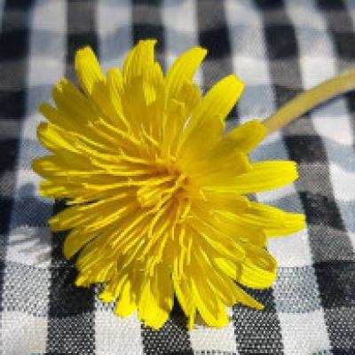 Selda kuruçay