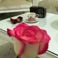 @birkahvelikara (instagram)