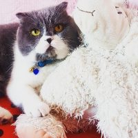 Kedi Ponçi